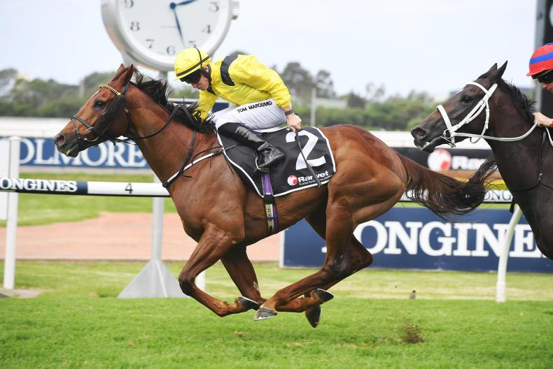 Haggas pair in top form for latest Australian assignments