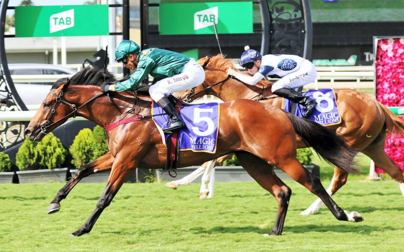 BREEDING INSIGHTS: First step to stardom for Redoute's Legacy