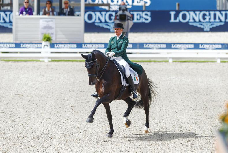 BREEDING: Sambuca - the home-bred dressage queen