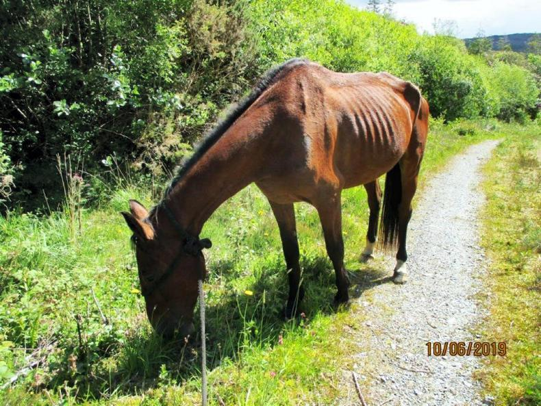 PONY TALES: Over 80 equines looking for good homes