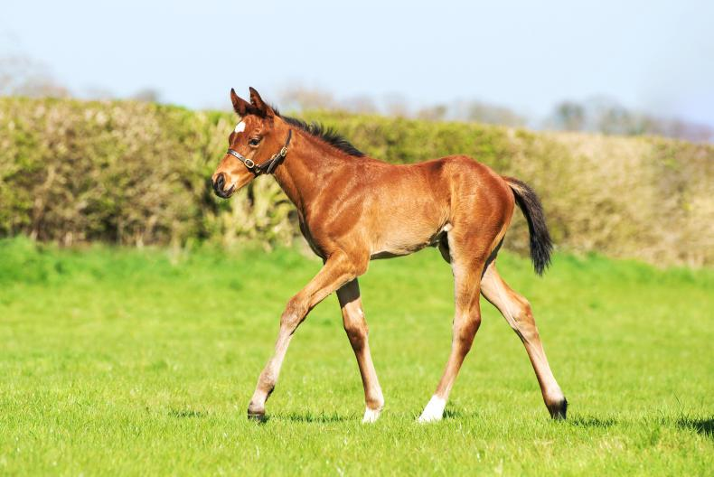 BREEDING INSIGHTS: Cracking first crop colt by Idaho