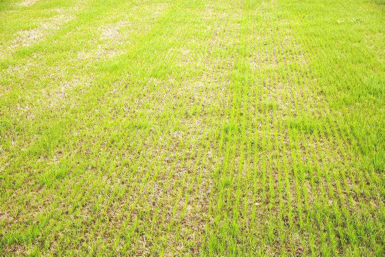 HORSE SENSE: Step-by-step guide to successful reseeding