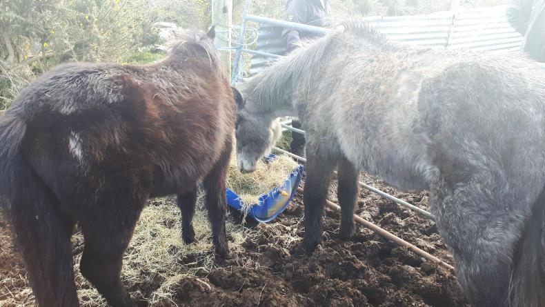 NEWS:  ISPCA and DAFM rescue seven horses