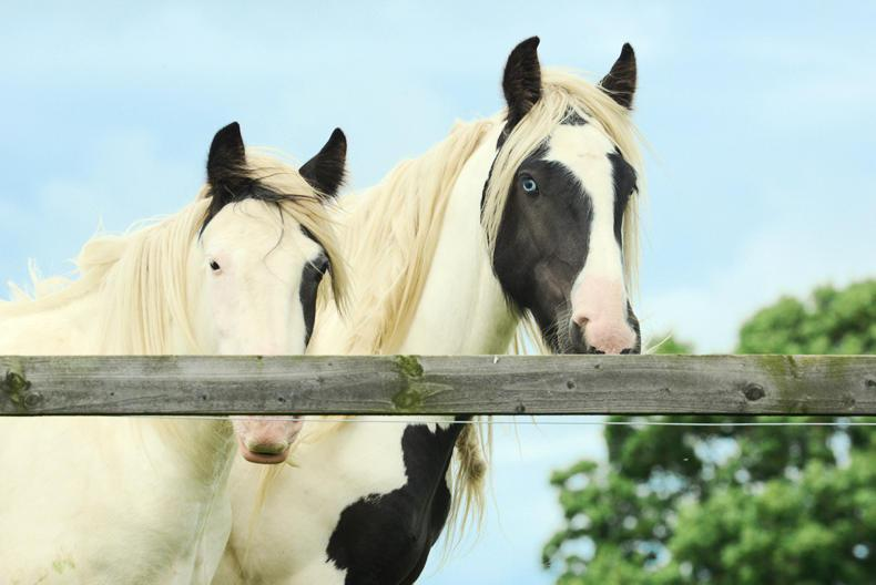 Can you spare €5 for the Irish Horse Welfare Trust?