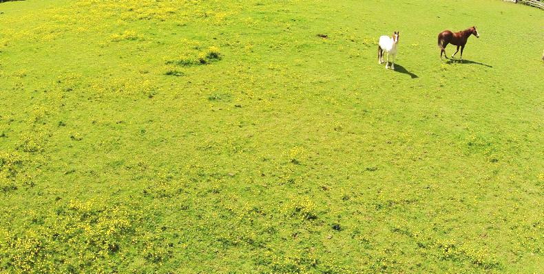 Envy adds a new dimension to weed control in equine paddocks