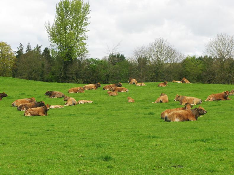 HORSE SENSE: How much did grazing land cost in 2019?