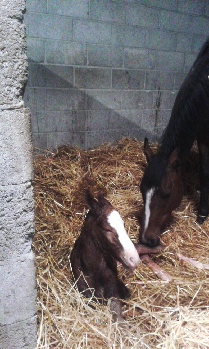 PONY TALES: Midwife becomes new Mammy!