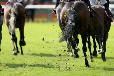 Rust backed as BHA focuses on plans for racing return
