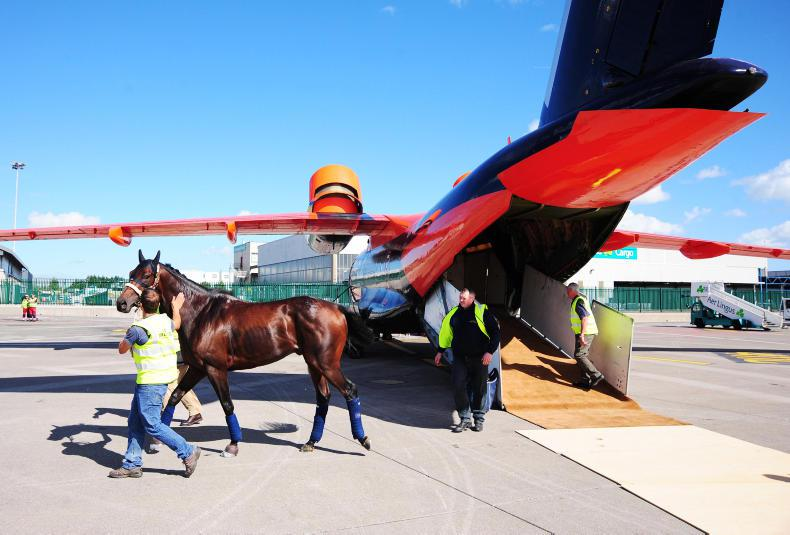 NEWS: HRI moves to bring French horses to Champions Weekend