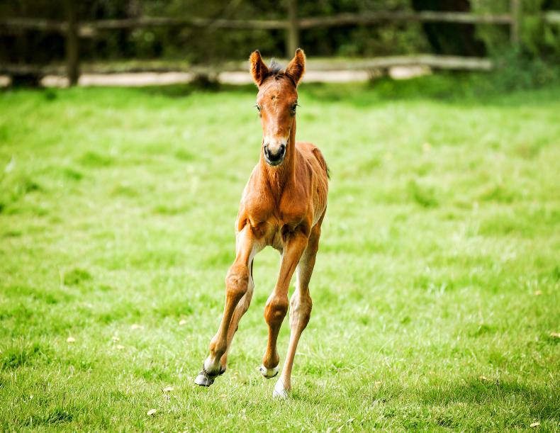PONY TALES: Help name this filly foal