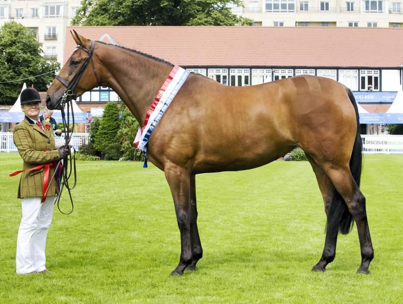Recent Death Of Stallion Porsch