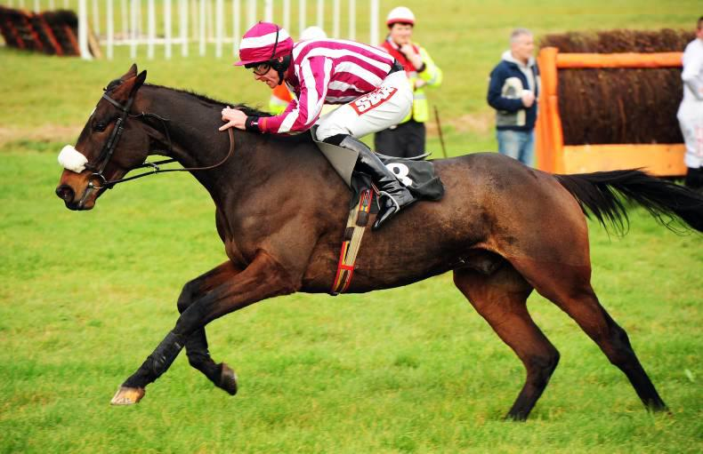 HENNESSY GOLD CUP: Home Farm can spring a surprise