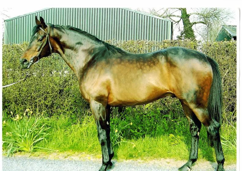 Prolific stallion Stowaway dies at Whytemount Stud