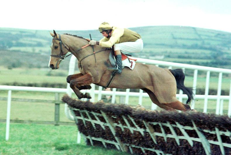 FEATURE: Golden Cygnet - the horse of the century