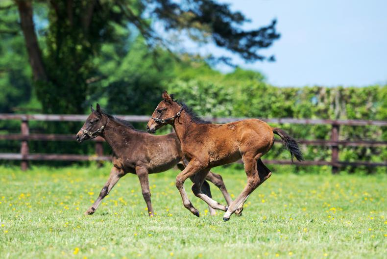 BREEDING INSIGHTS: Battle of the classic fillies