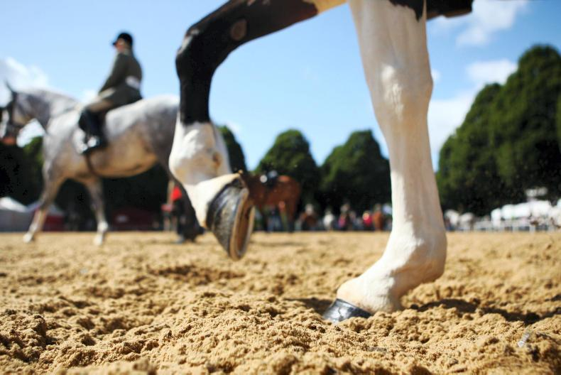 PONY KIDZ:  Mad about ponies? Test your knowledge with our quiz