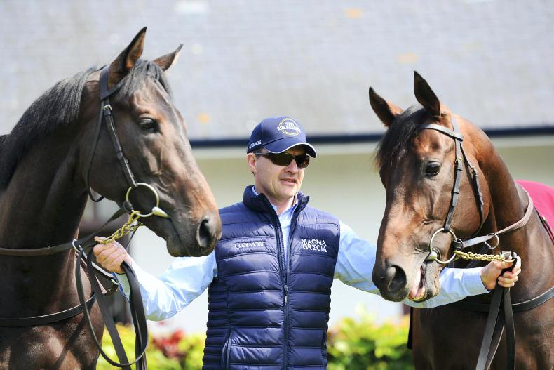 Arizona leading the way as O'Brien looks to add to Guineas haul
