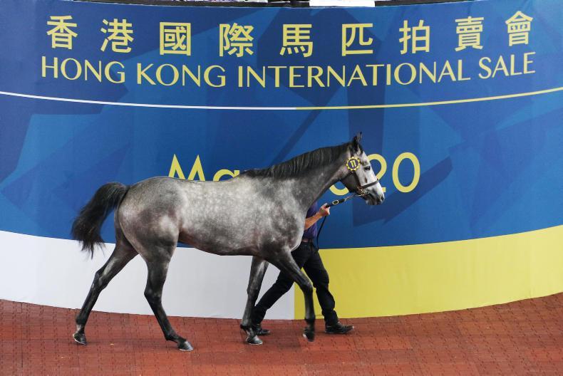 BREEDING INSIGHTS: Irish-breds top the Hong Kong International Sale