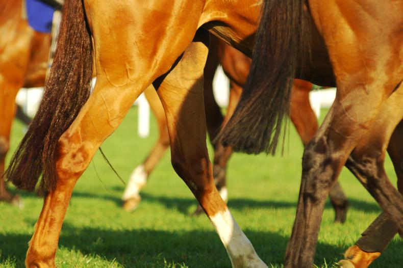 Surveillance programme launched to help racing track coronavirus cases