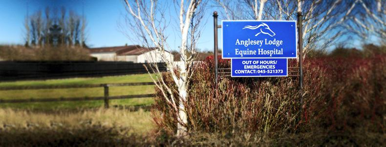 Equine veterinary
