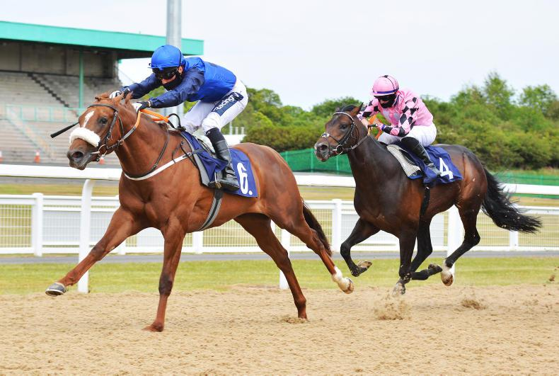 BREEDING INSIGHTS: Eight up as new sires are off the mark