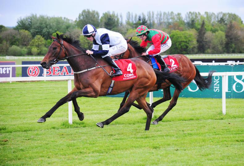 LEOPARDSTOWN SUNDAY: Old rivals Loveisthehigherlaw and Camphor to battle again