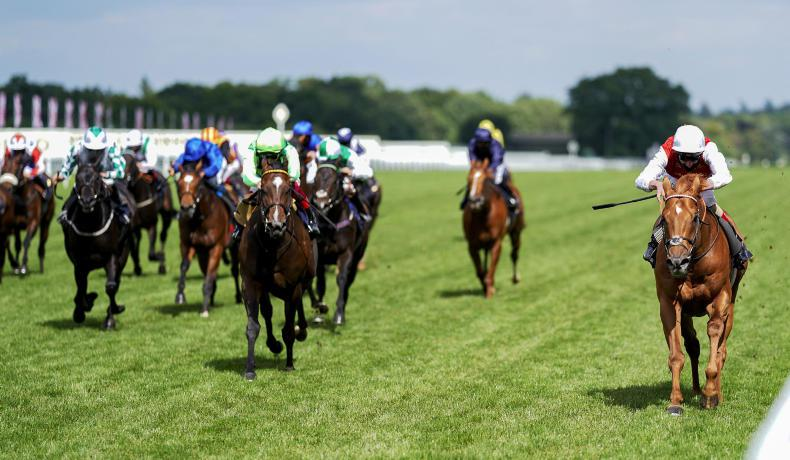 <h1> Royal Ascot Racing News from The Irish Field </h1>