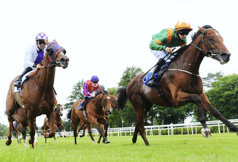 GOWRAN PARK WEDNESDAY: Murtagh winner can Make his name