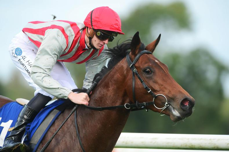 IRISH DERBY: 'Mr Garvey wanted to roll the dice'