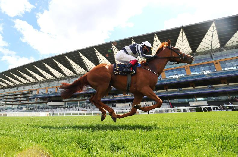 ROYAL ASCOT SATURDAY: Harrington's Star upholds family honour