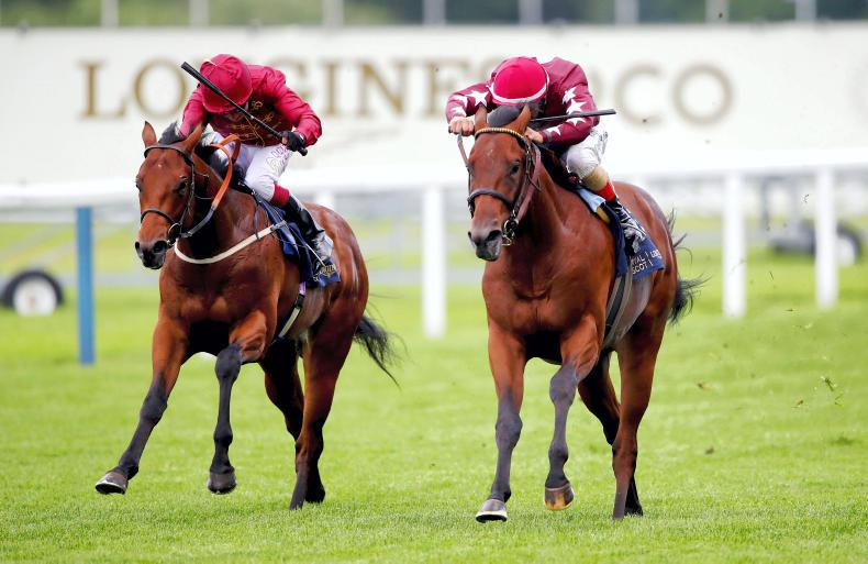 SIMON ROWLANDS: Classy Campanelle the top two-year-old