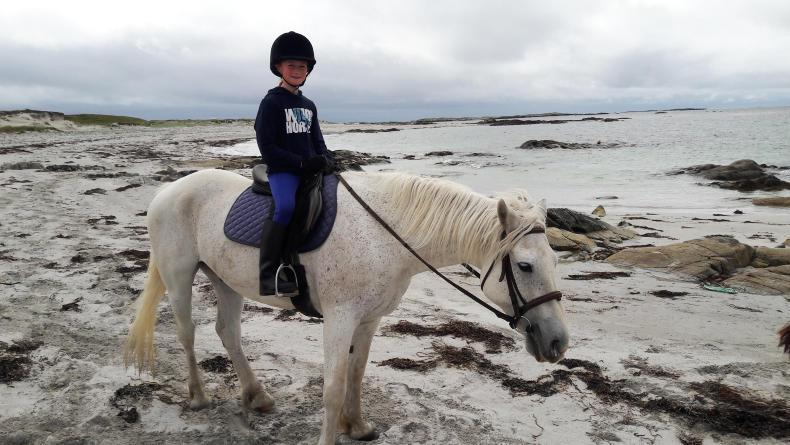 PONY TALES:  Aoife (11) writes book to aid ISPCA