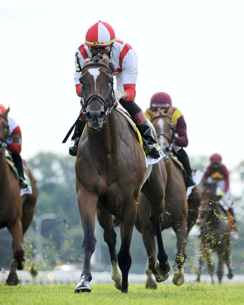 BREEDING INSIGHTS: Newspaperofrecord is back