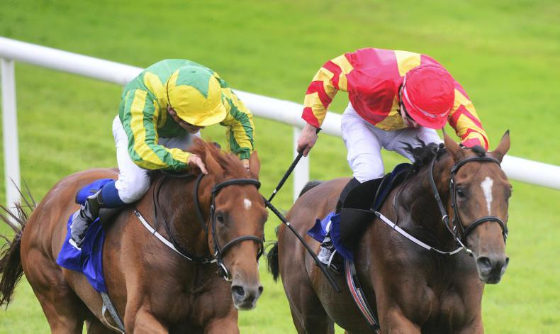RACING OWNERS: Royal Racing Club - 'We've a couple of nice horse to go to war'