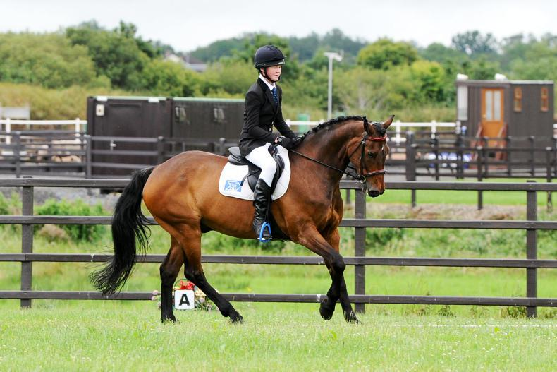 FLEXI EVENTING:  Fitz delivers win for Foster