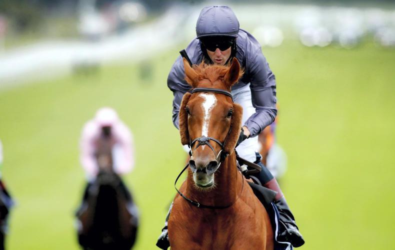 Steve Cauthen hails Emmet McNamara's Derby ride