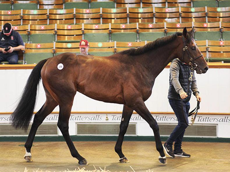 SALES: Excelebration colt heads solid Tattersalls Guineas Breeze-Up Sale