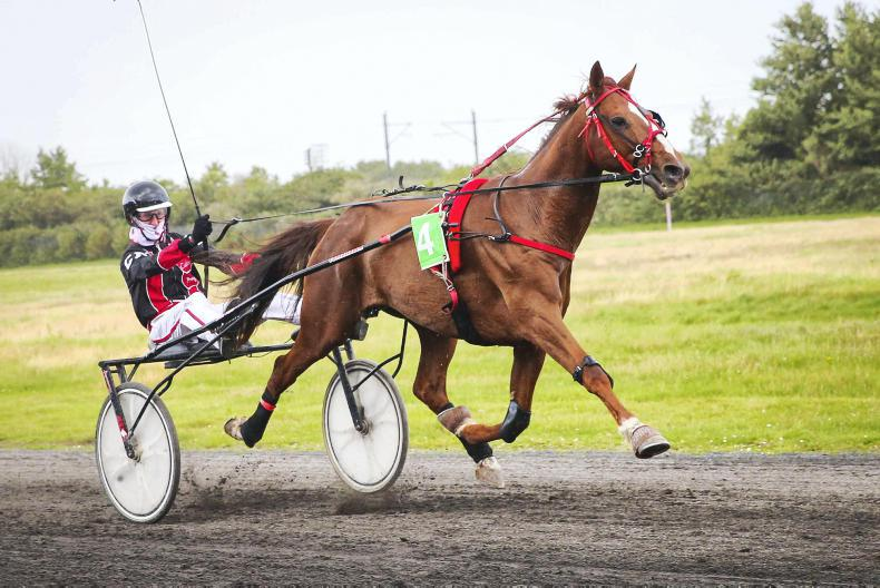 HARNESS RACING: Calvin gets his first past the post