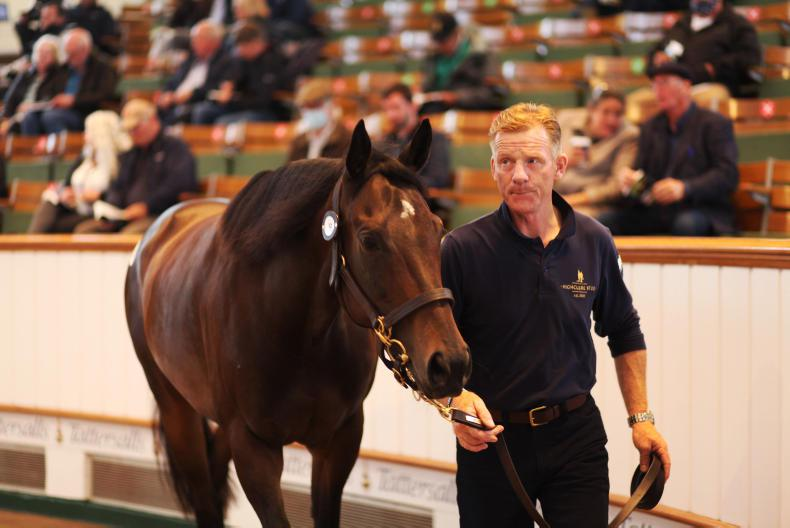 Half-sister to Prince Of Lir tops July Sale first day