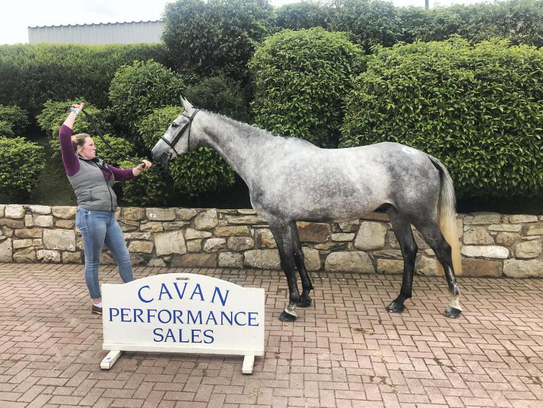 SALES: Positivity in Cavan with 82% clearance and top price of €10,000