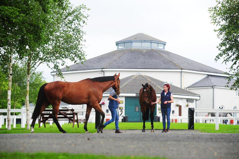 NEWS: HRI involved in Derby Sale discussion