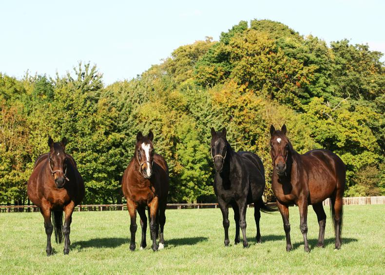 JUDDMONTE SPECIAL: Great matriarchs of the world