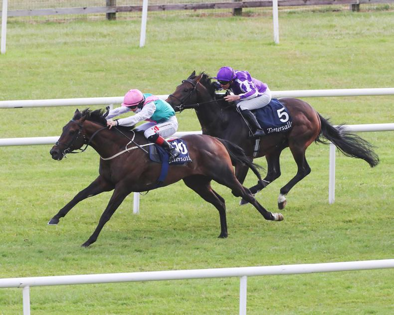 JUDDMONTE FEATURE: Siskin's classic year