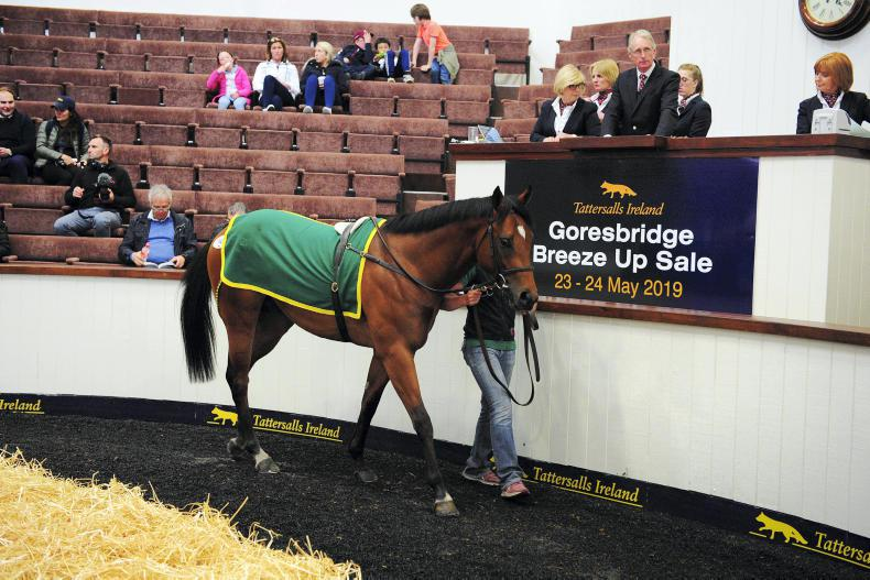 NEWS: Goresbridge Breeze-Up moves to Newmarket
