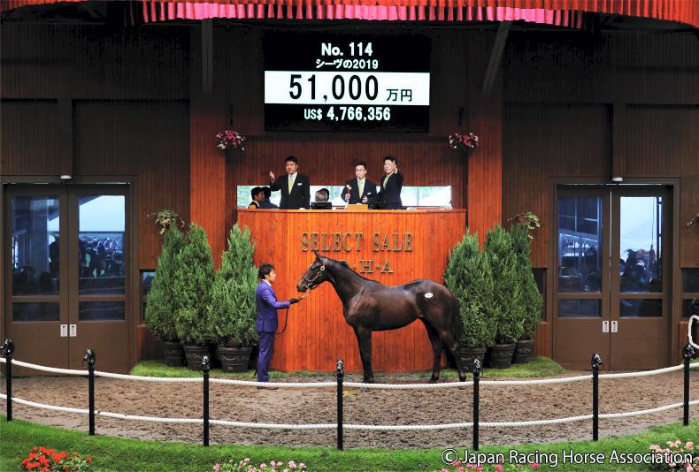 JRHA SELECT SALE: Loss of Deep Impact felt in the sale ring