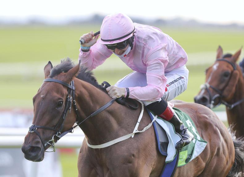 BREEDING INSIGHTS: Camelot's classic tally grows