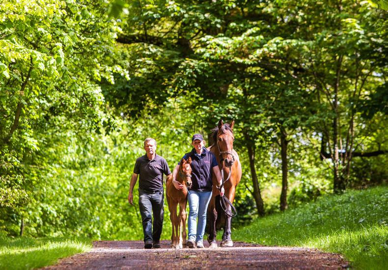 HORSE SENSE: Safety at the forefront of all stud farms