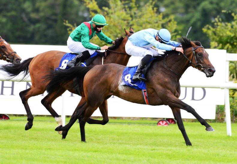 LEOPARDSTOWN SATURDAY: Bolleville a stylish winner for O'Brien