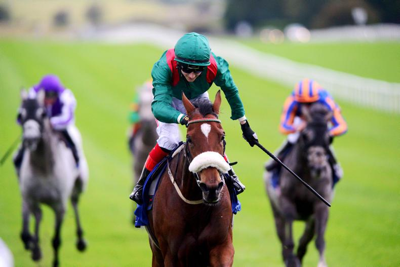 GOWRAN PARK PREVIEW: Kastasa can outstay rivals in Vintage Tipple