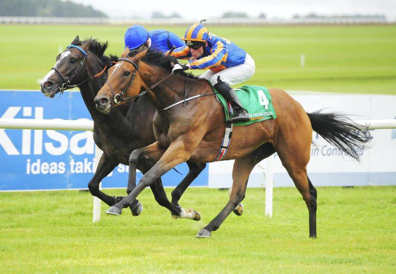 NEWS: The Irish Field adds name to Royal Whip